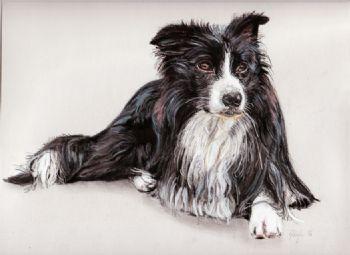 Collie Dog Study